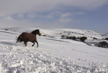 Horse going down snowy hill